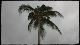 Cuba 449